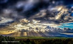 Maui rays by Mike Neal.