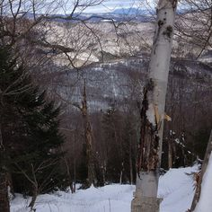 tree skiing i think im lost Ski Magazine, Ski Club, Racing Events, East Coast, Vermont, Acre, Skiing, Mad, Lost