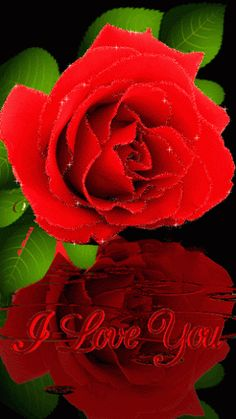 Red rose, i love you, water reflection gif images for valentines day, arte I Love You Images, Love You Gif, You Dont Love Me, My Love, Beautiful Gif, Beautiful Roses, Pretty Roses, Beautiful Pictures, Phone Screen Wallpaper