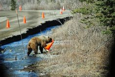 Alaskan road worker