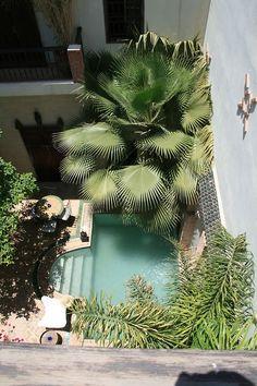 Des palmiers abritent cette piscine du soleil #pool #piscine #palmier