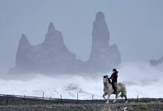 Icelandic horse in Vík in Mýrdal