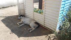 Bucharest: Against the start of the slaughter of street dogs Nach Bukarest: Gegen den Beginn der Tötung der Straßenhunde