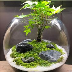 Terrarium Scene, Terrarium Jar, Terrarium Plants, Succulent Terrarium, Plant In Glass, Plants In Bottles, Indoor Water Garden, Moss Plant, Crystal Garden