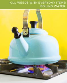 Boiling water is one of the best natural weed killers! Hometalk Blog :: The Truth About Natural Weed Killers