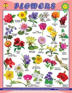 Flowers Name In Hindi English And Marathi Hd Image Flower Rose In 2020 All Flowers Name Indian Flower Names Flower Chart