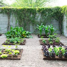 A Tucson Designer created the perfect from the garden to the table garden design.