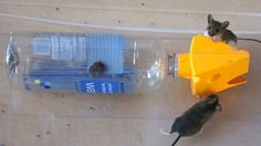 Catching 2 Mice in a Plastic Bottle Best Mouse Trap, Mouse Traps, Farm Projects, Sewing Projects, Dead Mouse Smell, Household Pests, Doodle, Rodents, Pest Control