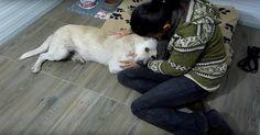 Ce chien cancéreux et sans abri vivait seul dans la rue, mais tout ce qu'il voulait, c'était qu'on lui fasse des câlins.
