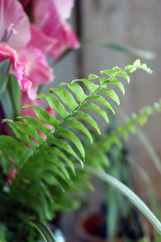 #nephrolepis #varen #ferns #inspiration #decorationgreens #love #greens #greenery #leaves #leaf #bouquet #foliage #doityourself Ferns, Greenery, Plant Leaves, Bouquet, Plants, Inspiration, Biblical Inspiration, Bunch Of Flowers, Fern