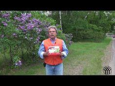 How to Eradicate Moles. Yard and gardens. - YouTube