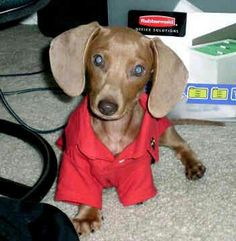 Good morning - Gustave's Dachshunds World and Friends