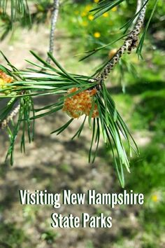 Get out into nature and explore the New Hampshire Parks! We've got loads of info and tips to share with you so you'll get the most out of your trip. Us Travel Destinations, Places To Travel, New Hampshire Attractions, Washington State Parks, New England Travel, Travel Ideas, Travel Guide, Romantic Getaways, Beautiful Places To Visit