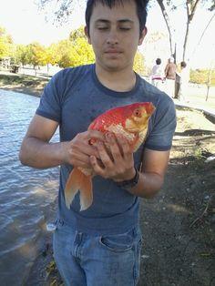 One big goldfish Fishing 101, Goldfish, Big, Common Carp