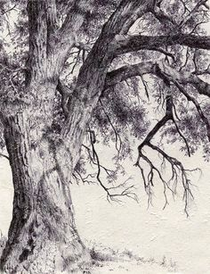 Tree Drawings Pencil, Landscape Pencil Drawings, Landscape Art, Landscape Paintings, Drawings Of Trees, Tree Pencil Sketch, Amazing Drawings, Realistic Drawings, Tree Sketches