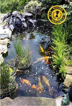 """Congratulations to Steve Jasse for being our April 2018 """"Beauty and the Best"""" winner! Steve, Please comment to tell us a little bit more about your pond. Beauty And The Best, Ponds Backyard, Water Garden, Koi, Terrarium, Aquarium, Congratulations, Pets, Inspiration"""
