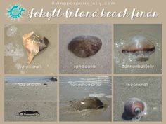 ID guide for beach finds on Jekyll Island, Georgia