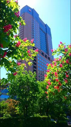 Crape myrtles and Hotel Nikkou Kanazawa, Kanazawa, Japan.