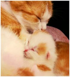 Mommy cat kissing her baby