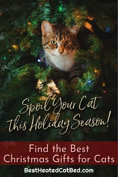 We have come up with a list of perfect presents that are certain to please! We are sure that you can find exactly what you are looking for on our list of Christmas gifts for kitties. Heated Cat House, Heated Outdoor Cat House, Heated Cat Bed, Cat Backpack Carrier, Heating Pads, Cat Cave, Cat Sweaters, Cat Beds, Outdoor Cats