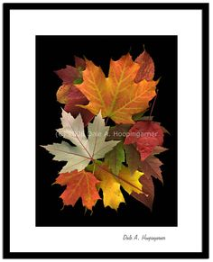 Dale Hoopingarner. Fall Leaf Collage,maple leaves. Beautiful and powerful piece I can see some details in leaf I never saw it before amazing one.