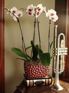 Double Orchid Planter