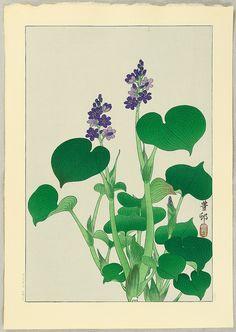 小原古邨 | 小原古邨: Purple Flowering Hosta ...