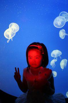 Redland aquarium