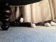 Peek a boo! Norwegian Forest Cat, Cairn Terrier, Peek A Boos, Happy, Cairn Terriers, Ser Feliz, Being Happy