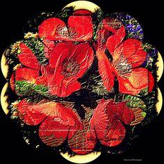 Tanya Lynn Photography  Special Garden Print $200.00