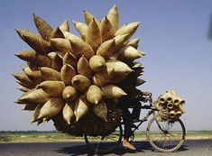 overloaded bicycle - Google Search