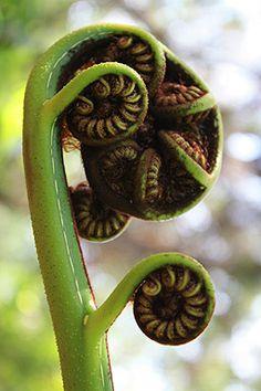 A New Zealand's Fern Frond