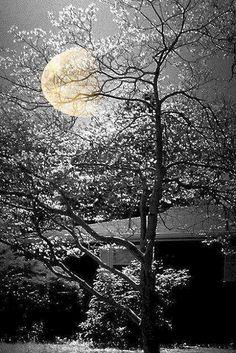 Good morning dear all.. - Raphy Jacob - Google+ Winter Moon, Moonlight Photography, Nature Photography, Moon Pics, Moon Pictures, Moonlight Sonata, Sun Moon, Stars And Moon, Night Sky Stars