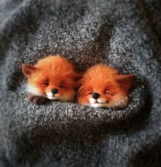 Russian Artist Creates Adorable Mini Felt Animals And Here Are 45 Of The Best Ones Baby Animals Pictures, Cute Animal Drawings, Cute Animal Pictures, Cute Drawings, Animals Images, Baby Animals Super Cute, Cute Little Animals, Cute Funny Animals, Tiny Baby Animals