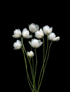 White on black flowers