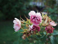 About Me Blog, Plants, Plant, Planets