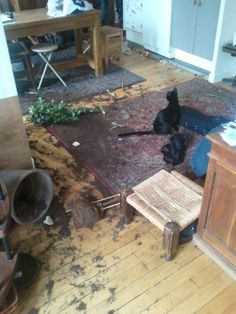 I think we're done here, black cat mischief.