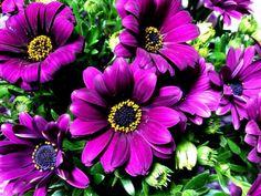 Flowers in Italy     #dimorfoteca  #spring  #primavera  #fiori