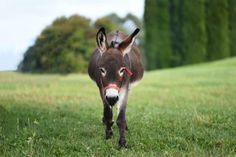 What You Need To Know About Donkey Bathing And Grooming Minature Donkey, Donkey Donkey, Cute Donkey, Rodeo Events, Trick Riding, Chimpanzee, Trust Yourself, Farm Animals, Nature Photography
