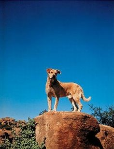 """Birth: 1952  Death: 1962  Spike - Canine Actor. Rescued by animal trainer Frank Weatherwax from a North Hollywood Animal Shelter, he was trained to perform and do tricks. He auditioned for and won the role of 'Old Yeller' in the 1957 Walt Disney movie """"Old Yeller""""; which may be his most memorable role."""