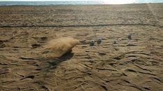 Boul  am Strand von Conil de la Frontera