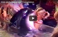 Funny compilation of Kids at the Aquarium