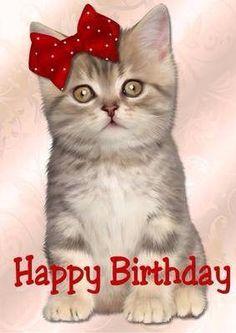 Cute Kitten Happy Birthday in Card Creator Gallery Happy Birthday Cat Images, Cat Birthday Wishes, Birthday Card Pictures, Happy Birthday Greetings Friends, Happy Birthday Wallpaper, Birthday Card Sayings, Happy Birthday Friend, Happy Birthday Girls, Cute Birthday Cards