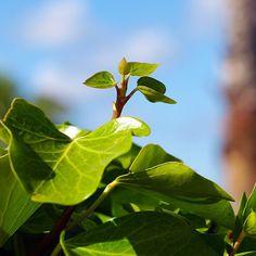 Coisas que me inspiram! Bom-dia! #inspiração #inspire #morningbeauty #verde #green