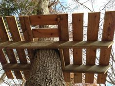 Building a tree perch, tree deck or treehouse is a DIY backyard project that will delight children