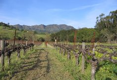 Chateau Montelena Vineyard - Napa - all year round guide to wine country -  Winerist