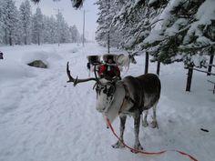 後座不是該有一大堆的禮物嗎??— 在Rovaniemi, Lapland。