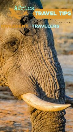 Camping with wild elephants at Elephant Sands in Botswana Africa. This is a campsite that combines the beauty of African nature and its wildlife, Elephant Sands. Click to read the full Adventure Travel Blog post at http://www.divergenttravelers.com/elephant-sands-camping-adventure-botswana/
