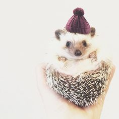 This Hedgehog Day, Treat Yourself With 15+ Pictures Of Hedgehogs With Hats