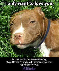 Read how one staffer fell in love with Pit Bulls.
